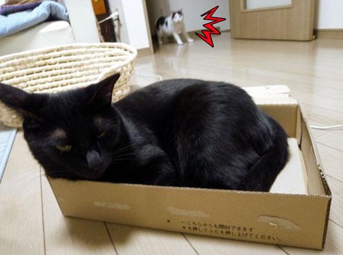 アマゾン箱の黒猫