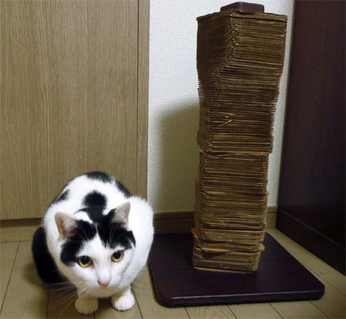 猫とバリバリタワー