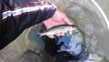 PAP_0428_20140626123745d8a.jpg