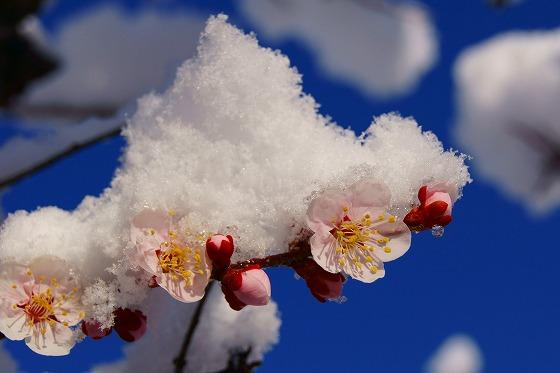 140311雪の朝-1