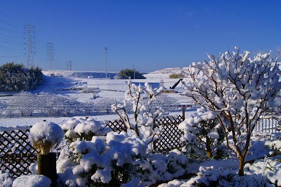 140311雪の朝-2