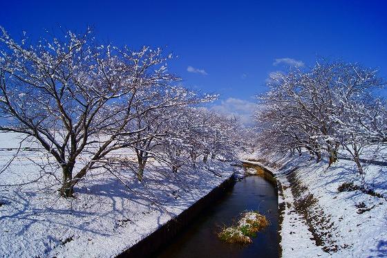 140311雪の朝-3