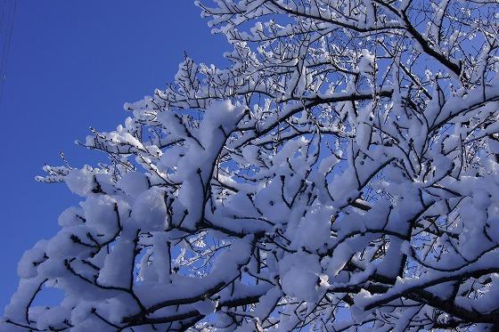 140311雪の朝-4