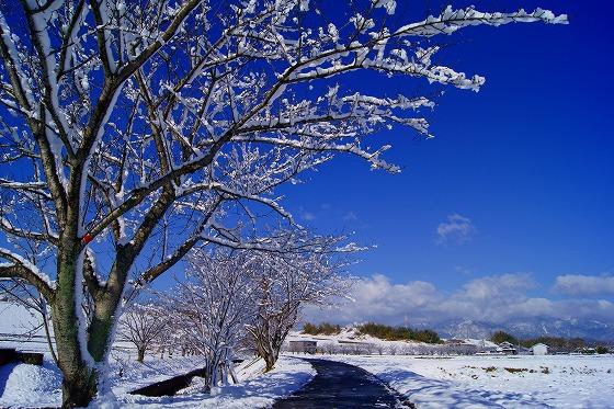 140311雪の朝-5
