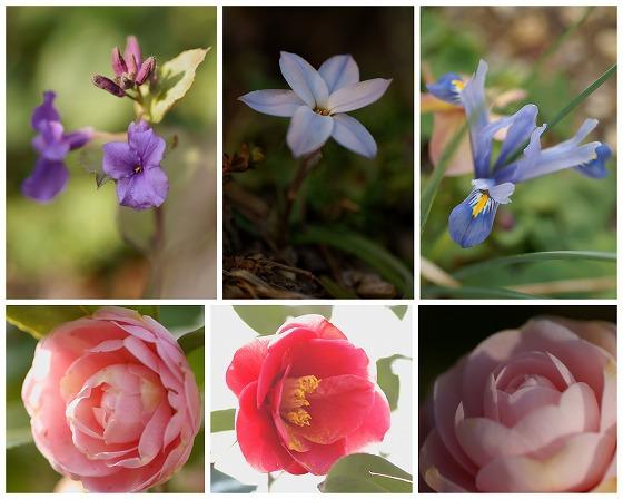140317庭の花