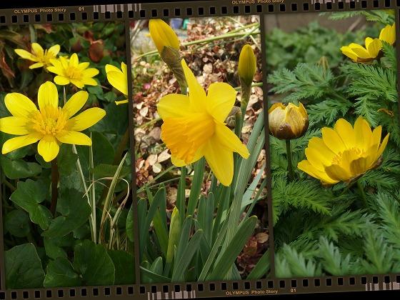 140317黄色い花昼