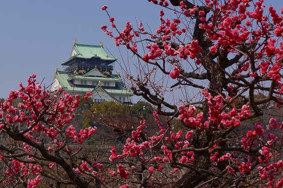 140324大阪城公園と梅
