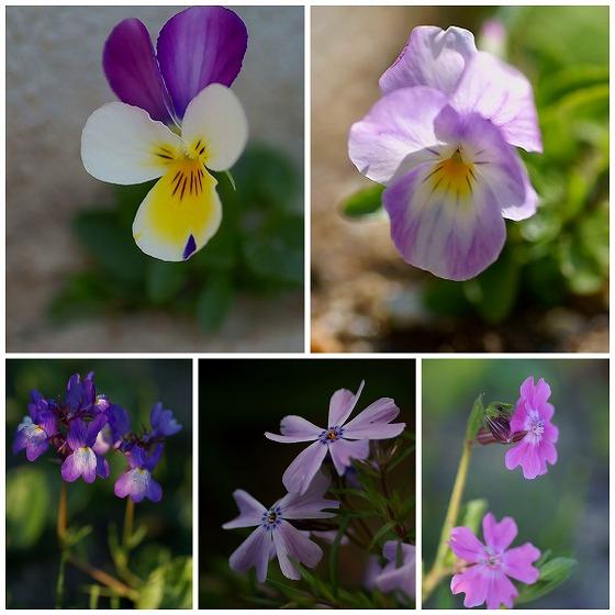 140411庭の花