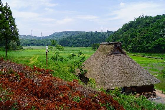 140603敦賀湿地帯-2