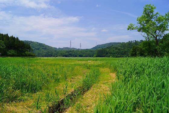 140603敦賀湿地帯-3