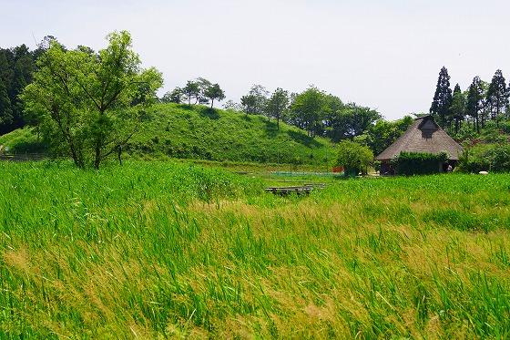 140603敦賀湿地帯-4