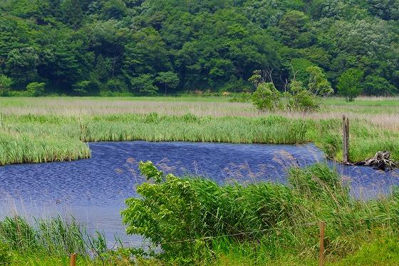140603敦賀湿地帯-5