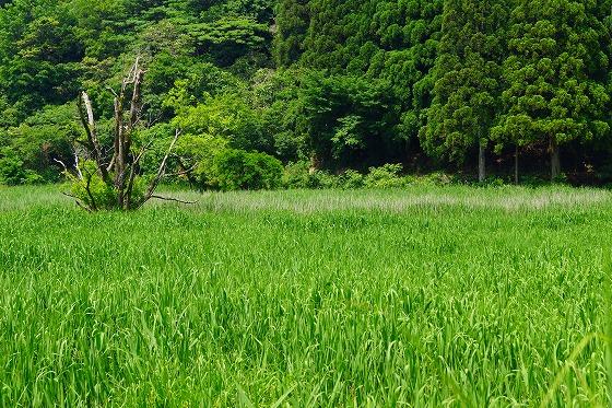 140603敦賀湿地帯-6