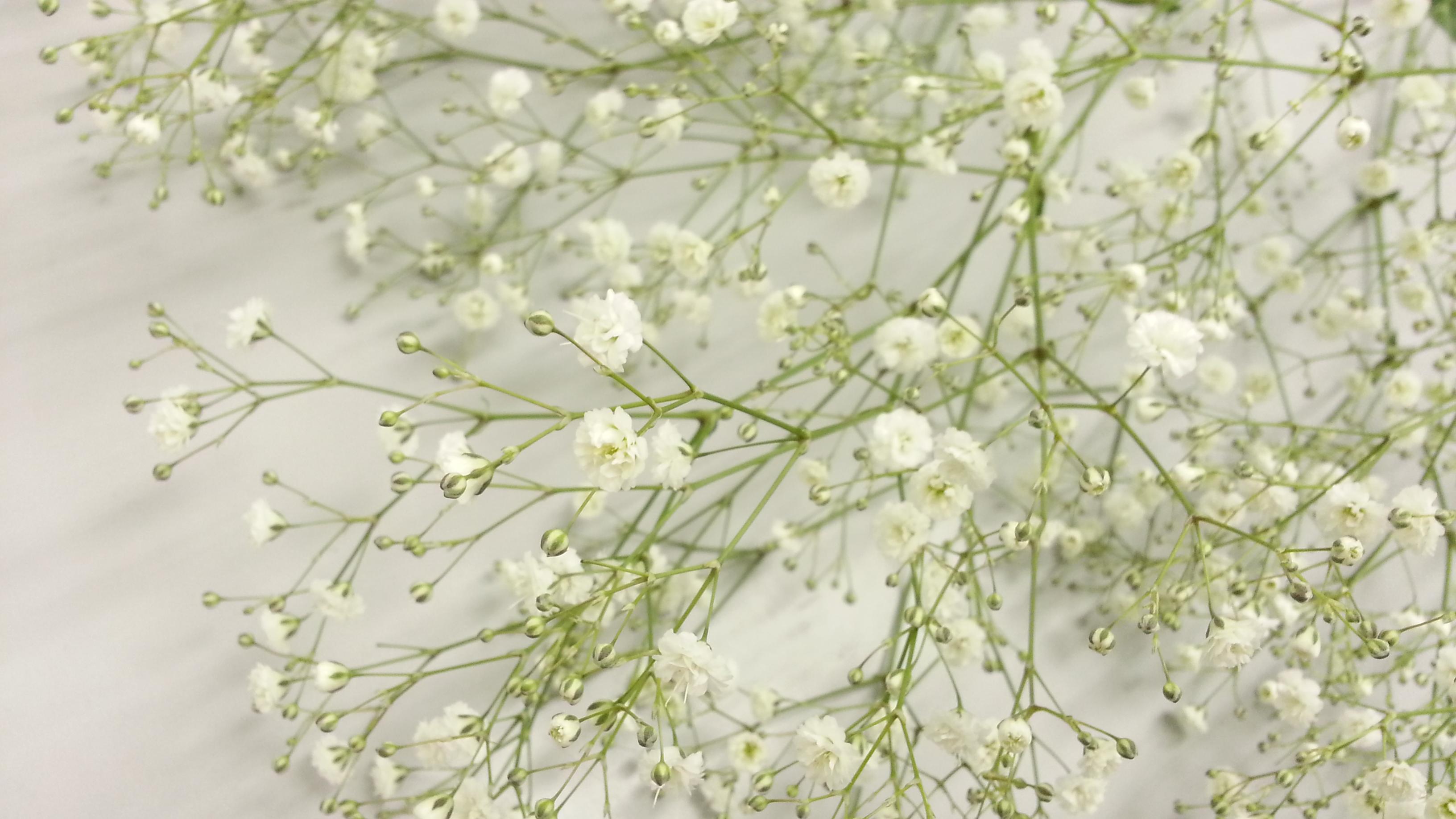 花 かすみ 言葉 草