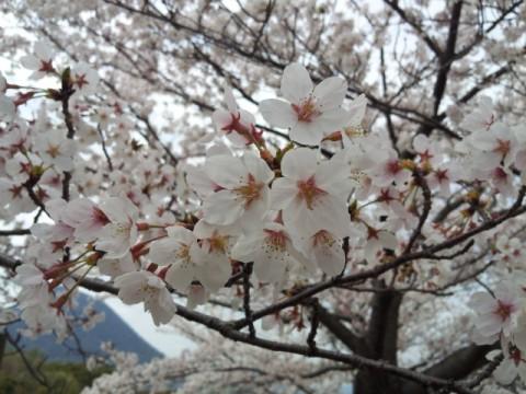 飯山総合運動公園①