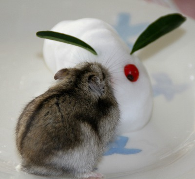 雪ウサギ140216p4