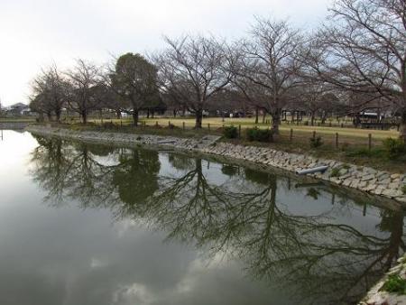 春の足音公園 031