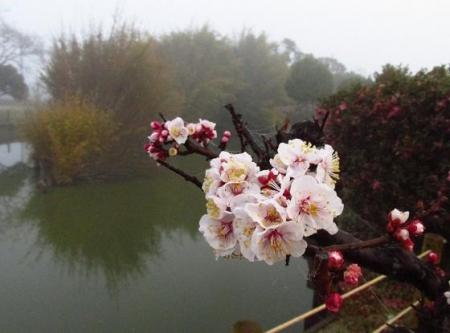 霧の朝 006