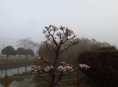 霧の朝 005