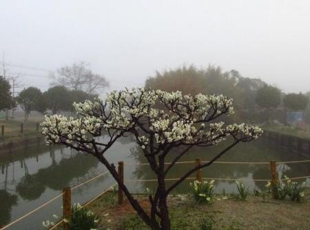 霧の朝 004