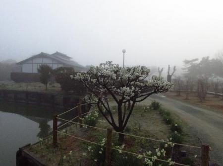 霧の朝 003