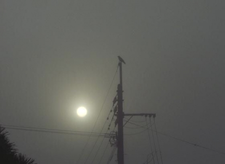 霧の朝 024