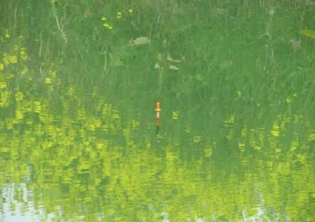 沖の端川の菜の花 052