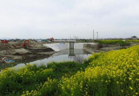 沖の端川の菜の花 065