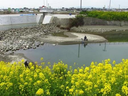 沖の端川の菜の花 060