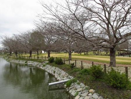 桜公園 050