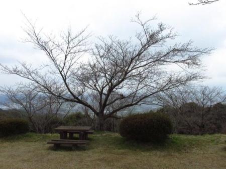 桜の蕾清水山 036