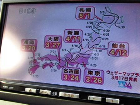 桜開花 清水 074