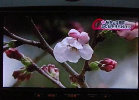黒木と開花宣言 098