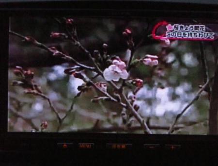 黒木と開花宣言 097