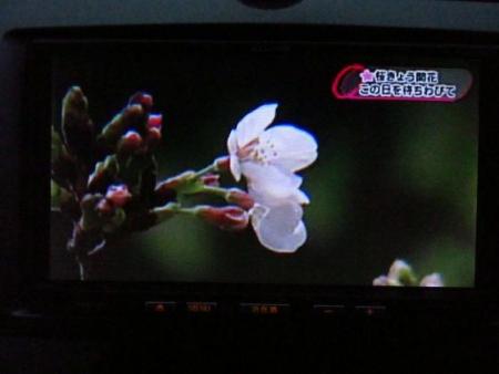 黒木と開花宣言 102