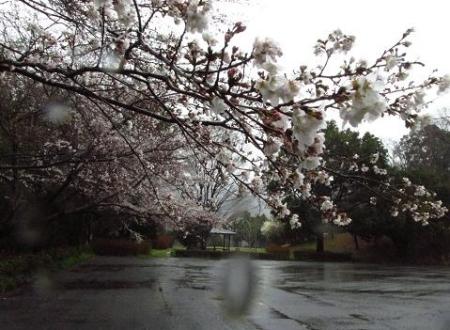 星野は雨 019