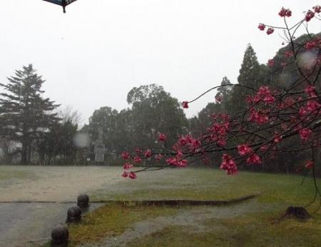星野は雨 036