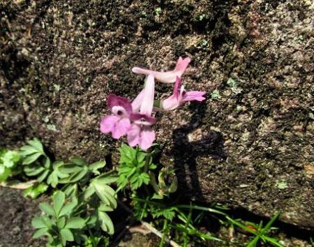 円応寺の桜 118