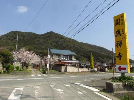 円応寺の桜 001