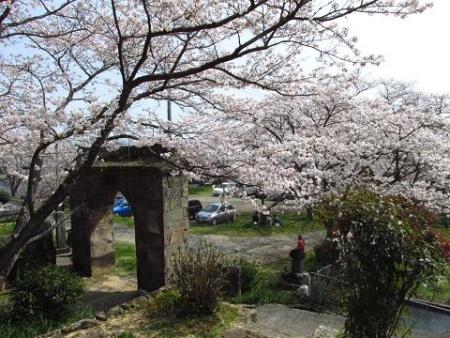 円応寺の桜 131