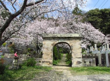 円応寺の桜 034