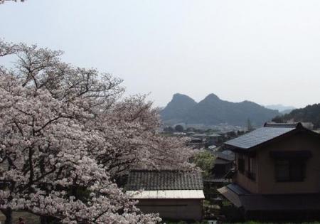 円応寺の桜 128