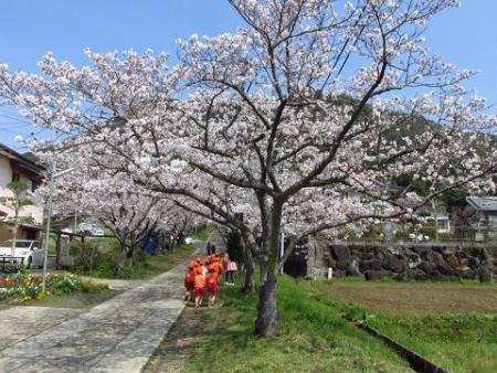 円応寺の桜 006