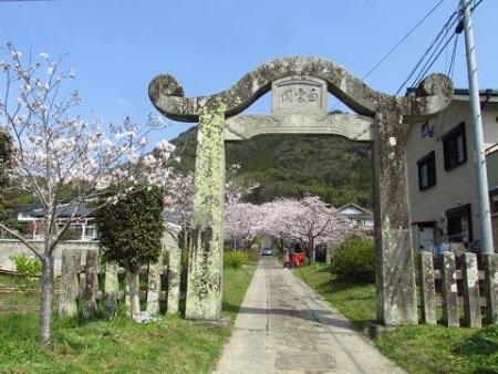 円応寺の桜 002