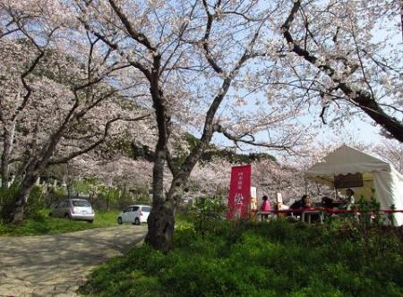 円応寺の桜 030