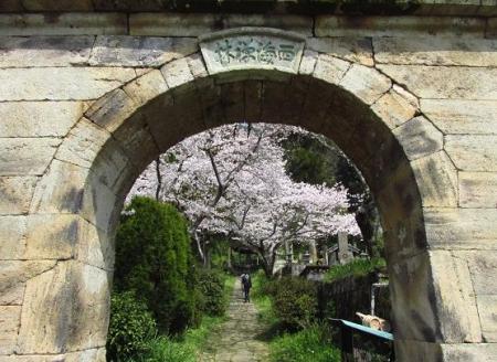 円応寺の桜 037