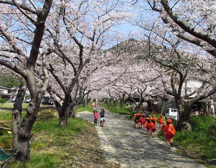 円応寺の桜 008