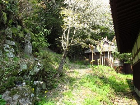 円応寺の桜 115