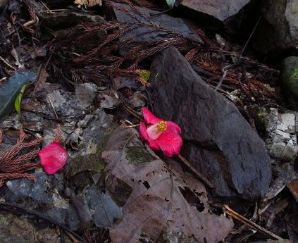 円応寺の桜 065