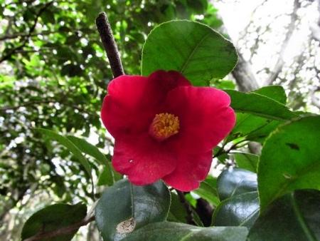円応寺の桜 088